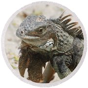A Gray Iguana With Spines Along It's Back Round Beach Towel