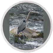 A Great Blue Heron At The Spokane River 3 Round Beach Towel