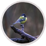 A Great Tit In The Rain Round Beach Towel