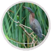A Green Heron By The Canal Round Beach Towel