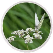 A Green-veined White (pieris Napi) Round Beach Towel by John Edwards