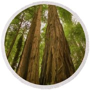 A Group Giant Redwood Trees In Muir Woods,california. Reaching F Round Beach Towel