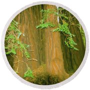 A Group Giant Redwood Trees In Muir Woods,california. Round Beach Towel