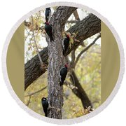 A Group Of Acorn Woodpeckers In A Tree Round Beach Towel