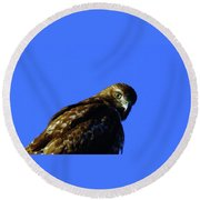 A Hawk Looking Back  Round Beach Towel
