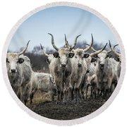 Grey Cattle Herd Round Beach Towel