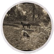 A Horse In The Field Round Beach Towel