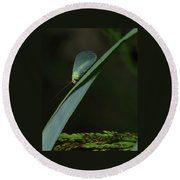 A Little Bug On A Grass Blade  Round Beach Towel