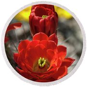 A Little Red Beauty  Round Beach Towel