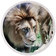 A Male Lion, Panthera Leo, King Of Beasts Round Beach Towel
