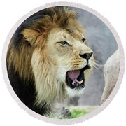 A Male Lion, Panthera Leo, Roaring Loudly Round Beach Towel