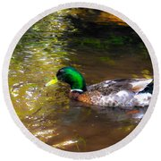 A Male Mallard Duck 3 Round Beach Towel