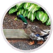A Male Mallard Duck 4 Round Beach Towel