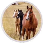 A Mare And Two Friends Round Beach Towel