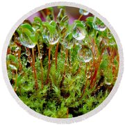 A Microcosm Of The Forest Of Moss In Rain Droplets Round Beach Towel