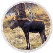 A Moose In Early Spring  Round Beach Towel