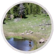 A Moose In The Rockies Round Beach Towel