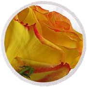 A Perfect Rose Round Beach Towel