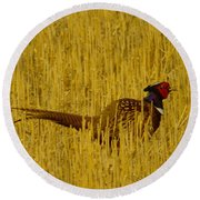 A Pheasant Looking For A Mate Round Beach Towel
