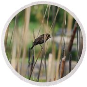 A Plumage Sparrow Round Beach Towel