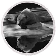 A Polar Bear Reflects Round Beach Towel