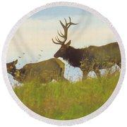 A Portrait Of A Large Bull Elk Following A Cow,rutting Season. Round Beach Towel