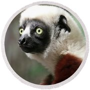 A Portrait Of A Sifaka Primate, A Large Lemur Round Beach Towel