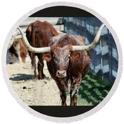 A Portrait Of A Texas Longhorn Steer Round Beach Towel