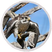 A Prairie Falcon Against A Blue Sky Round Beach Towel
