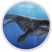 A Prognathodon Saturator Swimming Round Beach Towel