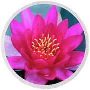 A Red And Yellow Water Lily Flower Round Beach Towel