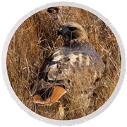 A Red Tailed Hawk  Round Beach Towel