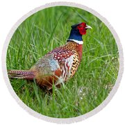 A Ring-necked Pheasant Walking In Tall Grass Round Beach Towel