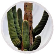 A Saguaro Afternoon Round Beach Towel