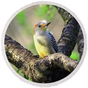 A Shady Woodland Bird Red-bellied Woodpecker Round Beach Towel