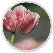A Soft Tulip In Focus Round Beach Towel
