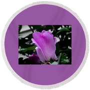 A Soft Violet Rose Of Sharon Round Beach Towel