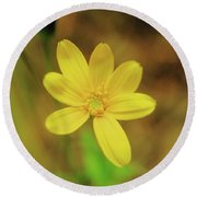 A Soft Yellow Flower  Round Beach Towel