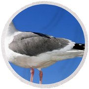 A Splendid Seagull Round Beach Towel