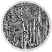A Stand Of Aspen Trees In Black And White Round Beach Towel