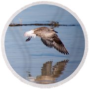 A Startled Sanderling By Darrell Hutto Round Beach Towel