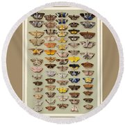 A Study Of Moths Characteristic Of Indo Round Beach Towel