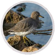 A Surfbird At The Tidepools Round Beach Towel