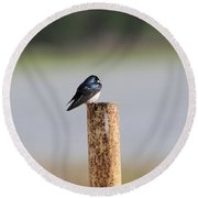 A Swallow On A Pole Round Beach Towel
