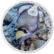 A Titan Triggerfish Faces Round Beach Towel