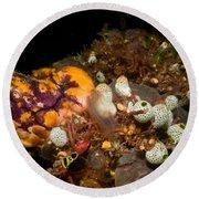 A Ton Of Tunicates Round Beach Towel