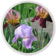 A Trios Of Irises Round Beach Towel