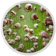 A Trunk Of Thorns Round Beach Towel
