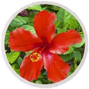 A Very Red Flower Round Beach Towel