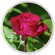 A Watered Rose  Round Beach Towel